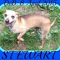 Adopt A Pet :: STEWART - White River Junction, VT