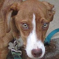 Adopt A Pet :: Daisy - Oakland, AR