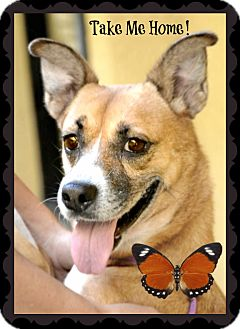 German Shepherd Dog Mix Dog for adoption in Ft. Lauderdale, Florida - Nina