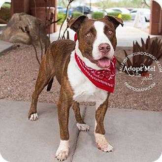 Labrador Retriever/American Staffordshire Terrier Mix Dog for adoption in Mesa, Arizona - Charlie