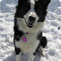 Adopt A Pet :: Baylee - Glenrock, WY