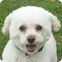 Adopt A Pet :: Harley - La Costa, CA