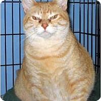 Adopt A Pet :: Rosa - Medway, MA