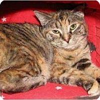 Adopt A Pet :: Giselle - Saskatoon, SK