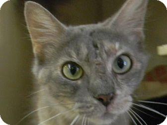 Domestic Longhair Cat for adoption in Tyner, North Carolina - Marley