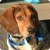 Adopt A Pet :: Harley - Beachwood, OH