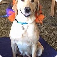 Adopt A Pet :: Penny Pup - Homewood, AL
