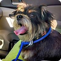 Adopt A Pet :: Chrissy - West Richland, WA