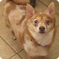Adopt A Pet :: Gizmo - Orlando, FL