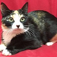 Adopt A Pet :: Angie - Scottsdale, AZ