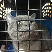 Adopt A Pet :: Bob - Southington, CT