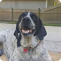 Adopt A Pet :: Ruby - Acushnet, MA