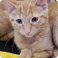 Adopt A Pet :: Clarice - Toast, NC