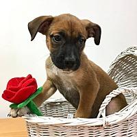 Adopt A Pet :: Tamita - Joliet, IL