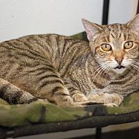 Adopt A Pet :: York - Martinsville, IN