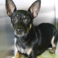 Adopt A Pet :: A1710116 - Los Angeles, CA