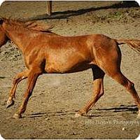 Adopt A Pet :: Eric - Durango, CO