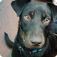 Adopt A Pet :: Delilah - Knoxville, TN
