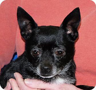 Chihuahua Mix Dog for adoption in Spokane, Washington - Arthur