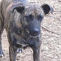 Adopt A Pet :: Missy - Remlap, AL