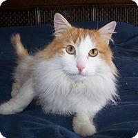 Adopt A Pet :: Hamilton - Colorado Springs, CO