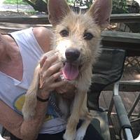Adopt A Pet :: Annie - Fair Oaks Ranch, TX