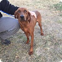 Adopt A Pet :: Penelope-URGENT - Providence, RI