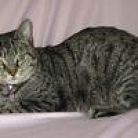 Adopt A Pet :: Carya - Powell, OH