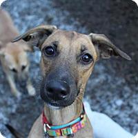 Adopt A Pet :: Renee - Hopkinton, MA