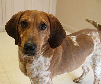 Australian Cattle Dog Mix Dog for adoption in Southington, Connecticut - Elmo