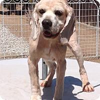 Adopt A Pet :: Dusty - Santa Barbara, CA