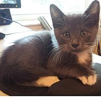 Adopt A Pet :: Reggie - Delray Beach, FL