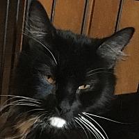 Adopt A Pet :: Oreo - Winchester, CA