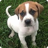 Adopt A Pet :: Tobe - Great Bend, KS