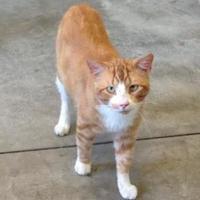 Adopt A Pet :: Tango - Larned, KS