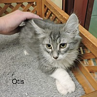Adopt A Pet :: Otis - Slidell, LA
