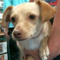 Adopt A Pet :: 155692 - Bakersfield, CA
