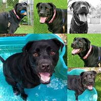 Adopt A Pet :: Lola - Clearwater, FL