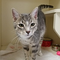 Adopt A Pet :: Ray - Elyria, OH