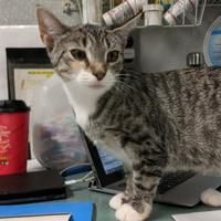 Adopt A Pet :: S'mores - New Freedom, PA
