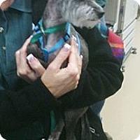 Adopt A Pet :: Skeeter - Ogden, UT