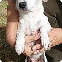 Adopt A Pet :: Little Miss Piggy - Sacramento, CA