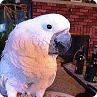 Adopt A Pet :: Bubba - Lenexa, KS