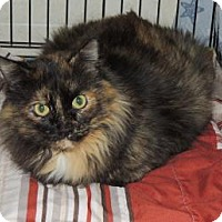Adopt A Pet :: Holly - Westville, IN