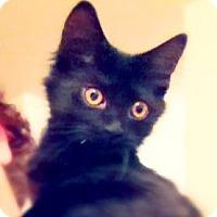 Adopt A Pet :: Roderigo - Green Bay, WI