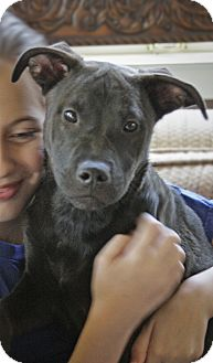 Labrador Retriever Mix Puppy for adoption in Nashville, Tennessee - LUCY