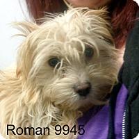 Adopt A Pet :: Roman - Greencastle, NC
