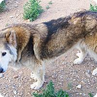 Adopt A Pet :: Winter - Santa Fe, NM