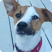Adopt A Pet :: Jax ~ Adoption Pending - Youngstown, OH