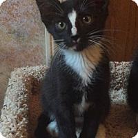 Adopt A Pet :: Hal - North Highlands, CA